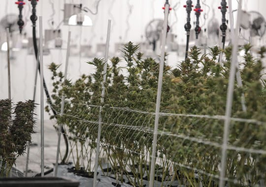 Cannabis workers in Cathedral City will save time, money with new ID cards