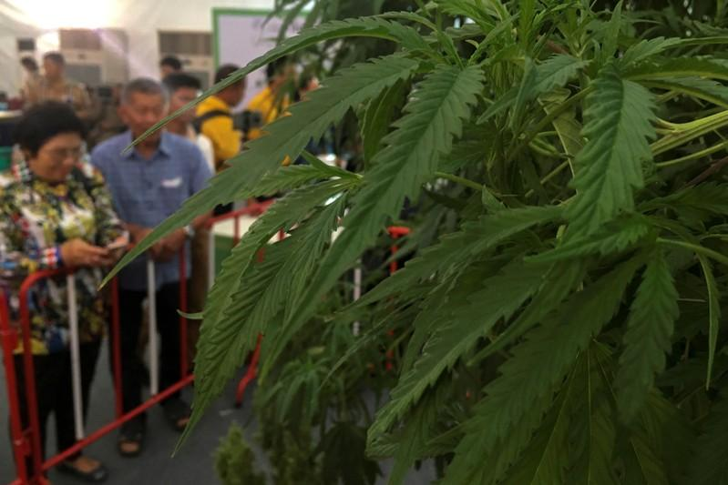 Thailand drops cannabis extracts from narcotics list; firms eye investments